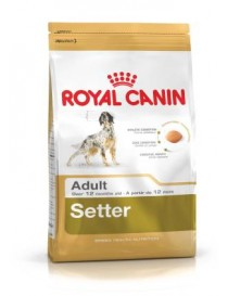 Royal Canin Setter adulto...